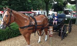Dutch Wonderland Horse and Buggy