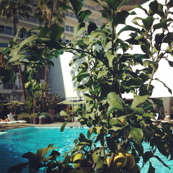 A view thru a lemon tree at the Beverly Hilton