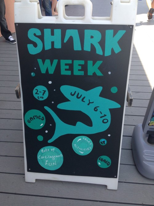"""It was then time to """"cool off"""" at The Aquarium.  We were thrilled to be there for Shark Week!"""